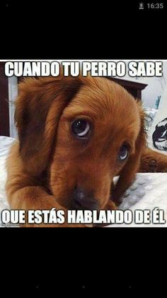 Imagenes con frases - Comunidad - Google+ Funny Animal Pictures, Cute Funny Animals, Cute Baby Animals, Really Cute Puppies, I Love Dogs, Puppy Care, Mundo Animal, Dog Photos, Dog Owners