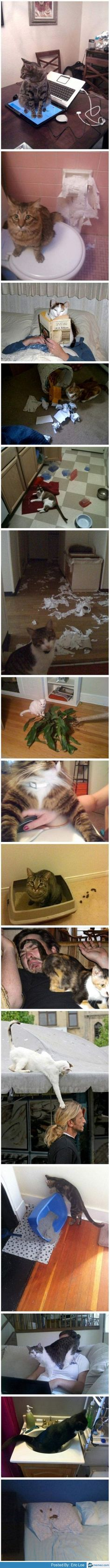 Scumbag cats. As my husband would say this is why we are NEVER getting a cat!