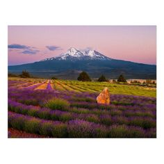 Quiet sunset at Mt. Shasta at the Mt. Wedding Color Schemes, Wedding Colors, Sonoma County, California Usa, Postcard Size, Smudging, Wild Flowers, Paper Texture, Create Yourself