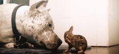 Animal gifs - dog and bunny
