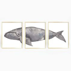 North Atlantic Right Whale Painting Modern Coastal Artwork Whale Watercolor Nautical Triptych Art Print or Canvas Set Whale Painting, Watercolor Whale, Beach Chic Decor, Nautical Fashion, Nautical Style, Triptych Art, Wall Art Prints, Canvas Prints, Nautical Theme Decor