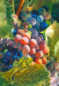 DesignerHill-food paintings TERRI HILL: I am a native of the Bay Area of Northern California... with my background in Graphic Design, I began painting in 2003, and have never looked back.