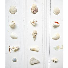a delightful coastal combo, vintage doors, shells and things from the... ❤ liked on Polyvore