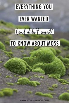 everything you ever wanted (and didn't want) to know about moss