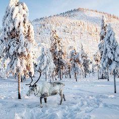 Это такое удовольствие ехать самой по ухабам склонам мимо оленей и красивейших пейзажей by zvolkova