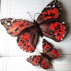 Бабочки Heather Everitt