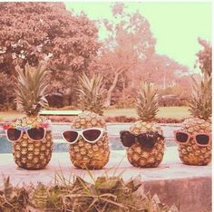 Sunglasses and  Pineapples