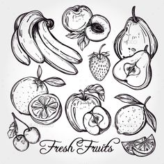 Various Fruits Set Vintage Linear Style - Food Objects