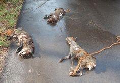 Polizei bitte um Mithilfe!!… 3 tote Hunde in Bachlauf gefunden…