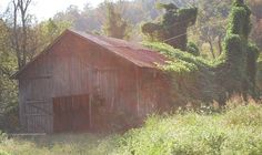 Kentucky Barn Charm ~ Tobacco Barn in Oct