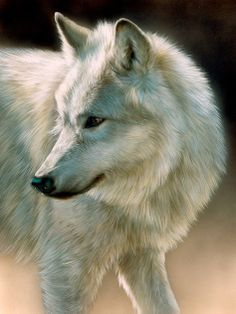 "Rebecca Latham - ""Shadows - White Wolf"""