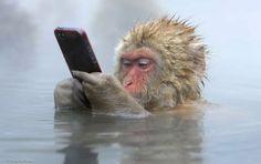 我的現代大都會 - 在2014年的野生動物攝影師的獲獎者