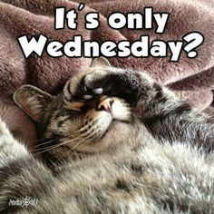 Weekend Quotes : It's only Wednesday - Quotes Sayings Funny Wednesday Quotes, Wednesday Morning Quotes, Hump Day Quotes, Wednesday Hump Day, Hump Day Humor, Wednesday Humor, Wednesday Motivation, Good Morning Quotes, Funny Quotes