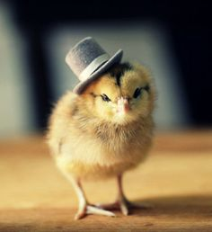 Chick In A Top Hat