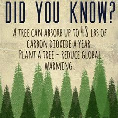 to Freecycle and Repurpose Tutorials Did you know? A tree can absorb up to 48 lbs of carbon dioxide a year. Plant a tree - reduce global warming.Did you know? A tree can absorb up to 48 lbs of carbon dioxide a year. Plant a tree - reduce global warming. Our Planet, Save The Planet, Planet Earth, Save Our Earth, Environmental Science, Environmental Ethics, Change The World, Did You Know, Sustainability
