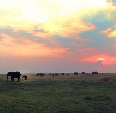 The sky and the elephants brings the hole picture together
