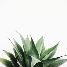 Imagen de plants, green, and white
