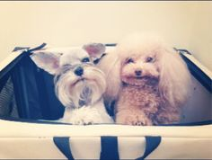 "Your Afternoon ""Aww"": See A Photo of Ciara's Precious Dogs 