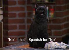 Salem from Sabrina the Teenage Witch lol
