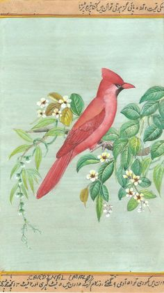Cardinal USA State Bird Indian style Art. The cardinal is the official state bird of Illinois, Kentucky, Indiana, North Carolina, Ohio, Virginia & West Virginia.