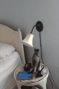 Watch Pixel the Kitten Gets a Surprise Animated Gif Image. Gif4Share is best source of Funny GIFs, Cats GIFs, Dogs GIFs to Share on social networks and chat.