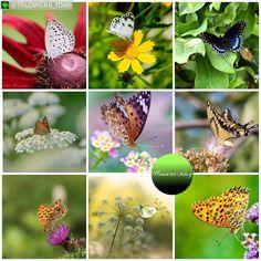 """いいね!132件、コメント1件 ― SAKA 🔷 Mod : @tv_flowers 🔷さん(@saka.flowers)のInstagramアカウント: 「@7flowers_1day #Regram #Repost via @PackeDApp #PackeDApp """" Butterflies shots """" 🌹 The talented…」"""