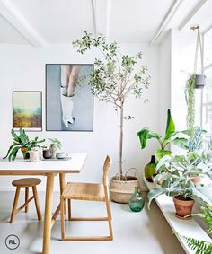 Life goal dream kitchen: Warm bright light and plants to sit in over morning coffee