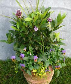 DIY: Extend the Season with Autumn Color Gardenista