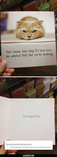 Shut Up, Taco #lol #haha #funny