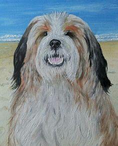 Barney, my Tibetan Terrier, oil on canvas