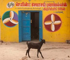 Cool Runnings travel photography in India by tcEclecticImages