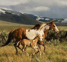 .Beautiful horse. stable-mates.com
