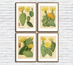 Cactus/Retro Cactus Wall Print Set/Cactus Combo/Yellow Flower Cactus Poster/Plant Printing Set/Vintage/Arizona As You Like, Just In Case, Vintage Images, Retro Vintage, Frame Download, International Paper Sizes, Etsy App, Botanical Art, Poster Wall