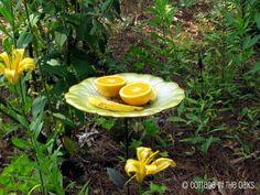 Comment attirer colibri et papillon dans votre jardin! - Trucs et Astuces - Trucs et Bricolages