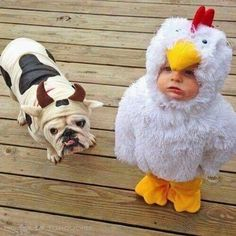Halloween is almost here! Check out the top English Bulldog Halloween costumes to inspire from! So Cute Baby, Cute Kids, Animals And Pets, Baby Animals, Funny Animals, Cute Animals, Funniest Animals, Barnyard Animals, Halloween Bebes