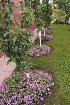 Front Yard Landscaping Ideas - Take these inexpensive and also very easy landscape design ideas for a lovely yard. Diy Garden, Plants, Lawn And Landscape, Home Vegetable Garden Design, Smart Garden, Front Yard Landscaping, Orchard Garden, Farm Gardens, Beautiful Gardens