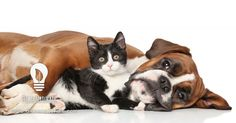 Benefícios de se ter um animal de estimação