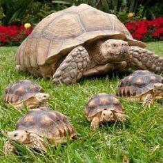 Turtles!! :)