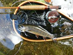Fly Fishing on the Rapidan River