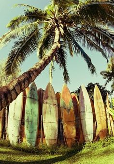 Old surf boards as fence boards