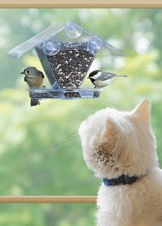 In the cat boarding room I want them to have access to a window. I'll put up a few bird feeders so they can watch the birds. Wild Birds Unlimited, Backyard Birds, Garden Birds, All Nature, Cat Boarding, Cool Pets, Fauna, Bird Feeders, Bird Nests