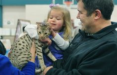 Evening News Photo by TOM HAWLEY  Teagan Dowe, 3, of Temperance had the opportunity to pet Midnitemoon Knuffle Bunny, a chocolate silver spotted Ocicat at the Midwest Persian Tabby Fanciers 50th all breed CFA Cat Show at the Monroe County Community College this weekend with her father Todd Dowe. The owner of the cat Robin Madigan of Waterville, Ohio enjoys letting the children pet her cats