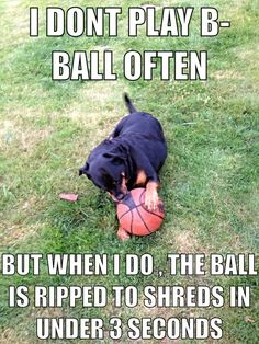 Rottweilers can be rough on balls!