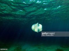 04-30 A jellyfish swims off the coast of Protaras on the south... #protaras: 04-30 A jellyfish swims off the coast of Protaras… #protaras