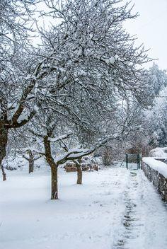 Winter Garden by ChristianThür Photography on Creative Market