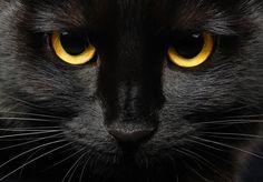 Gatos negros, puro misterio