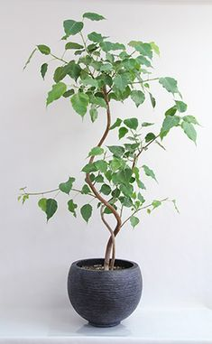 Plant Illustration, Art 3d, Bonsai, Indoor Plants, House Plants, Planting Flowers, Home And Garden, Exterior, Candles