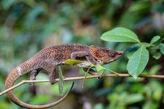 Andasibe National Park, Madagascar - by nomis-simon:Flickr