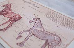 Anatomy of the Unicorn Unicorn Poster Medical by AwkwardAffections
