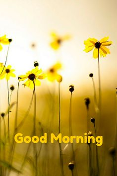 see a vast collection of good morning cards for social media! click